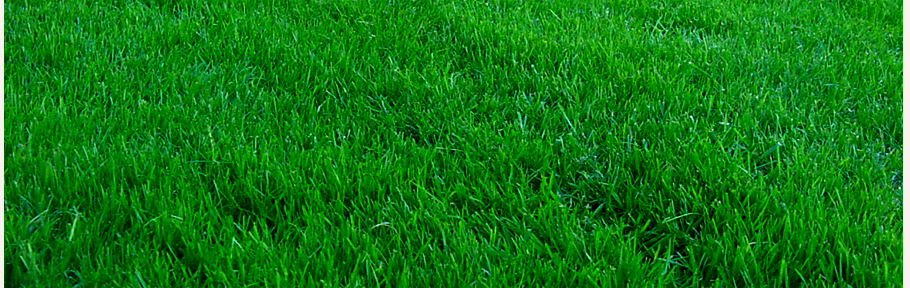 A Satisfied Client of Green Harvest Lawn Care
